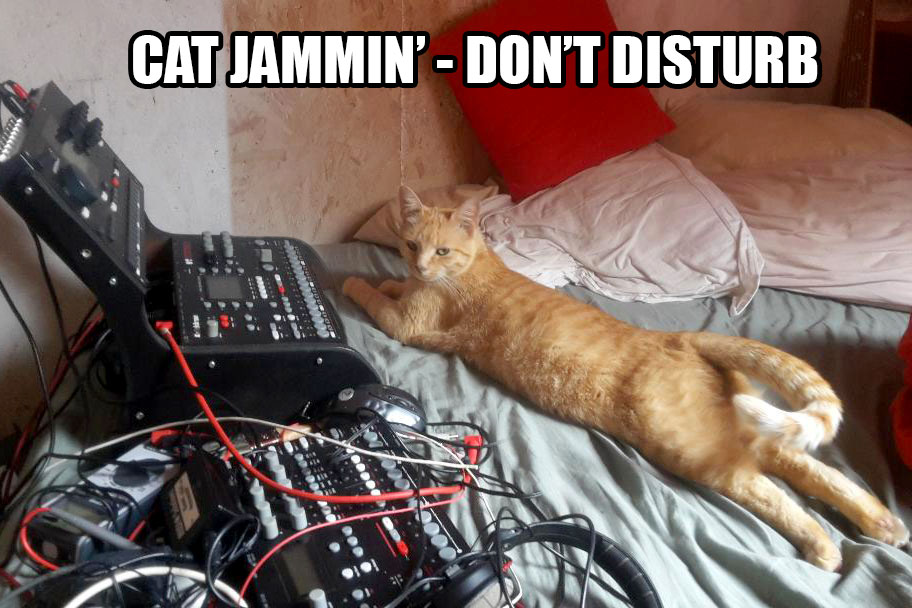 CAT-Jammin